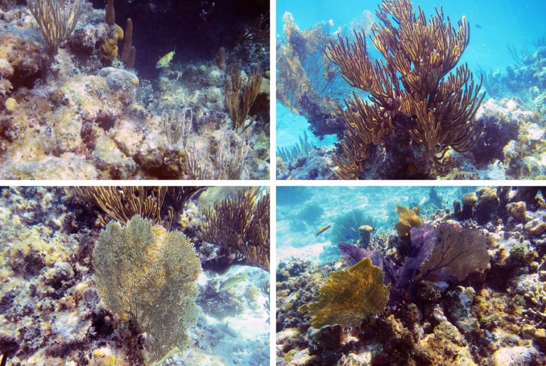 02_tortuga_divers_snorkel_blog