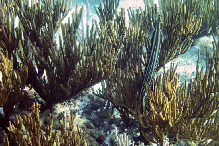 03_tortuga_divers_snorkel_blog