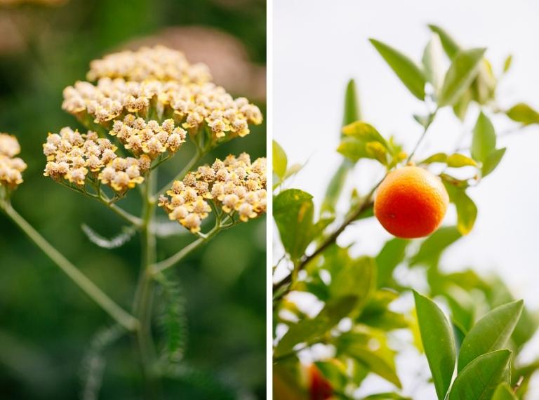 05_national_arboretum_blog