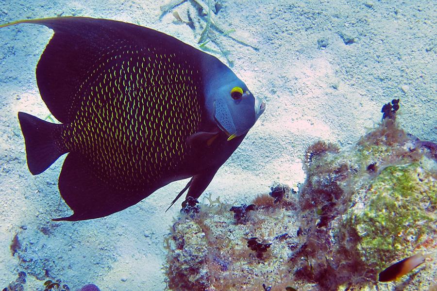 05_tortuga_divers_snorkel_blog