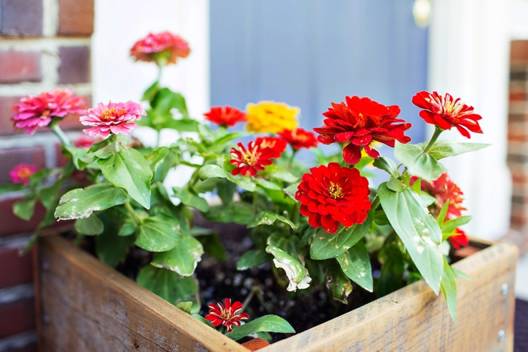 planter_blog