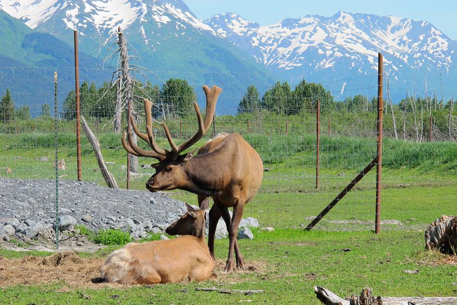 02_alaska_wildlife_conservation_center_blog