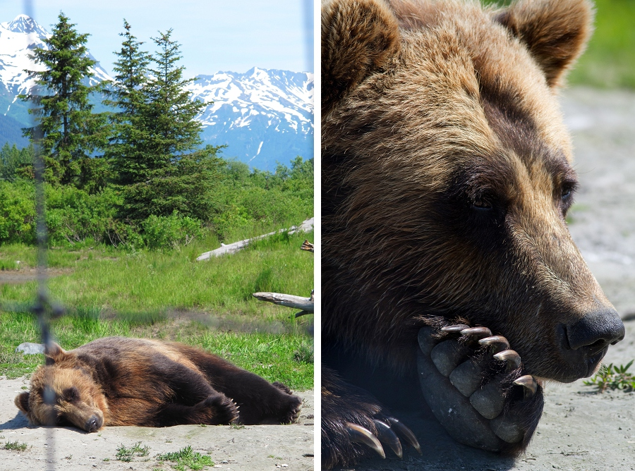 03_alaska_wildlife_conservation_center_blog