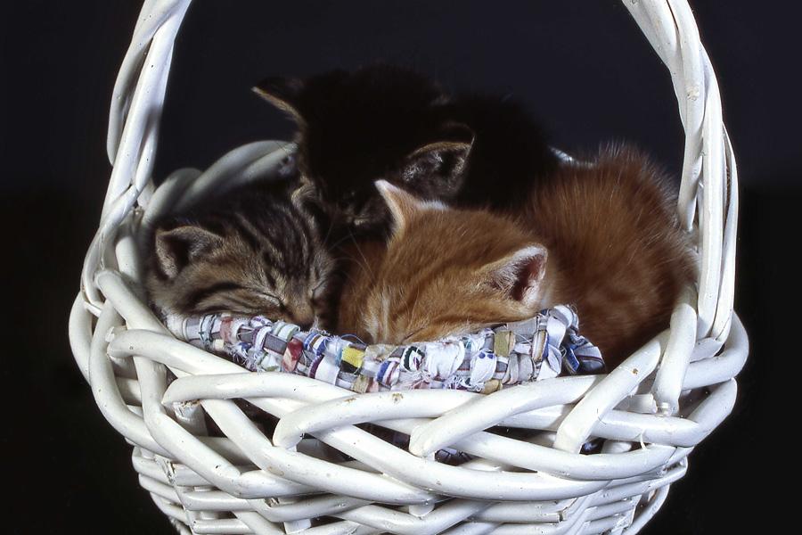 kittens_blog
