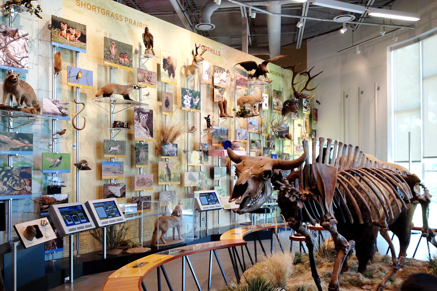 04_museum_of_discovery_blog