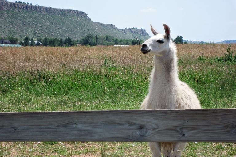 llama_blog