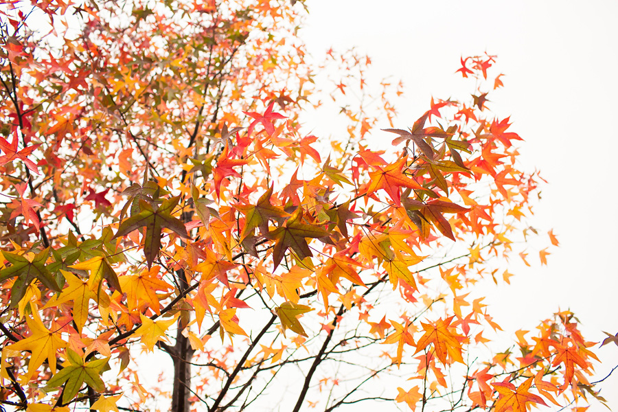 fall_leaves_blog