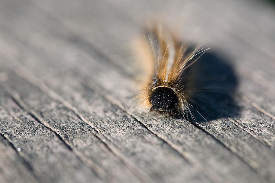 caterpillar_blog
