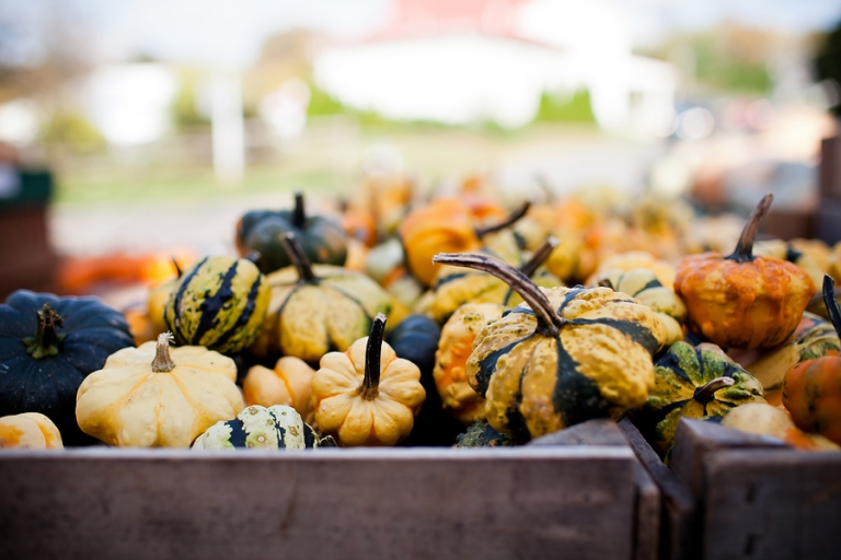 gourds_blog