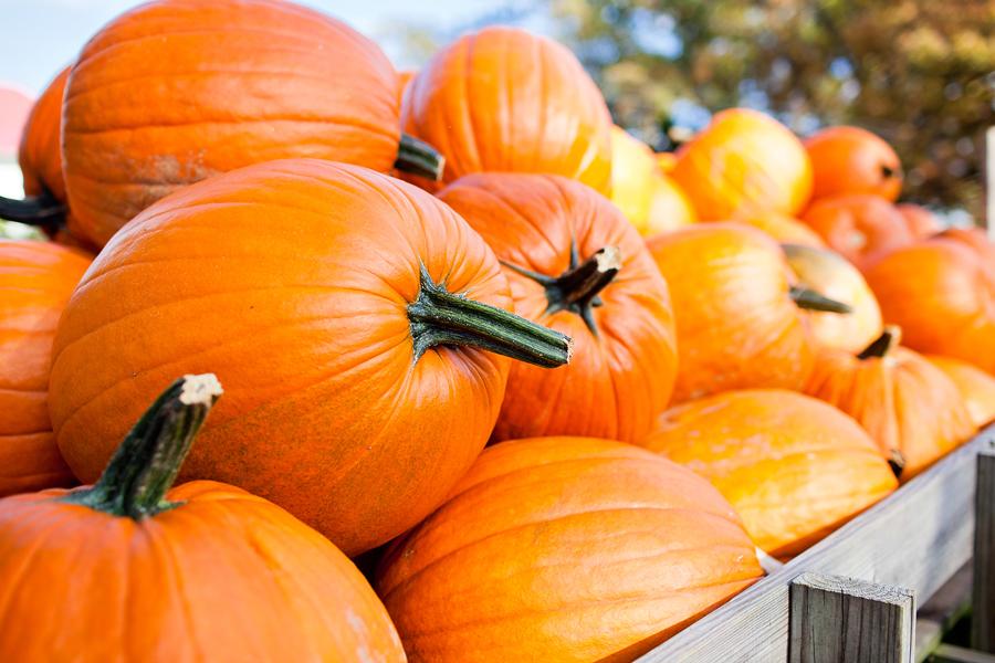 pumpkins_blog