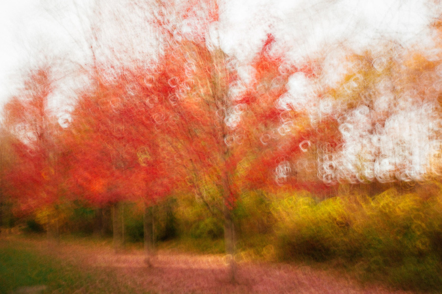 fall_blur_blog