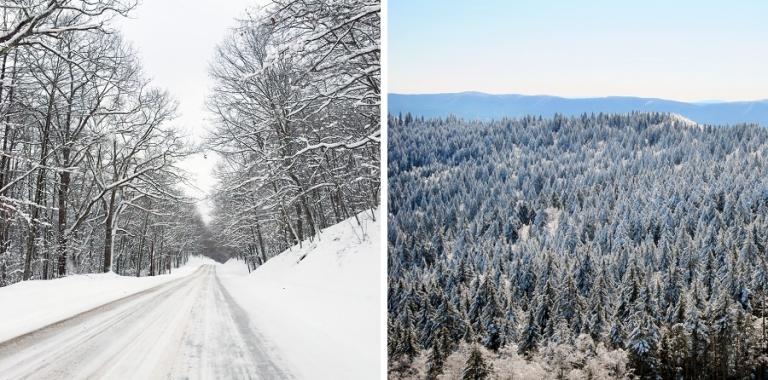 02_snowshoe_2015_blog