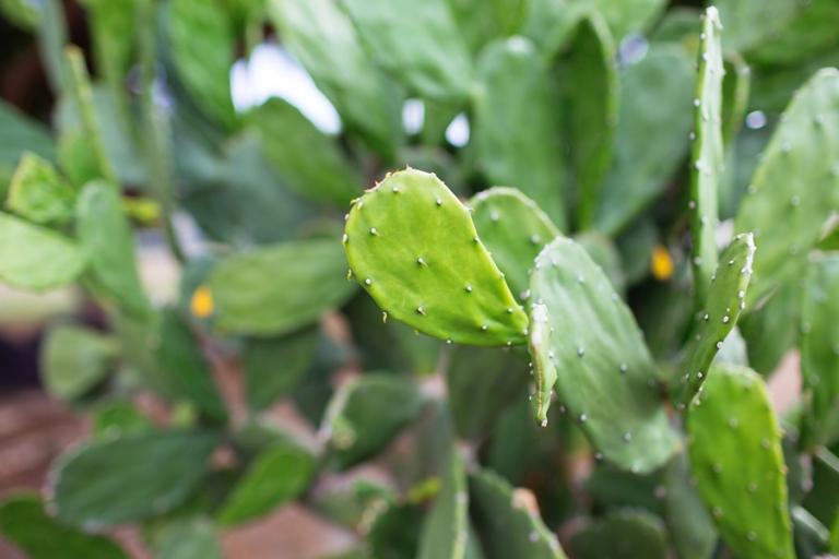cactus_blog