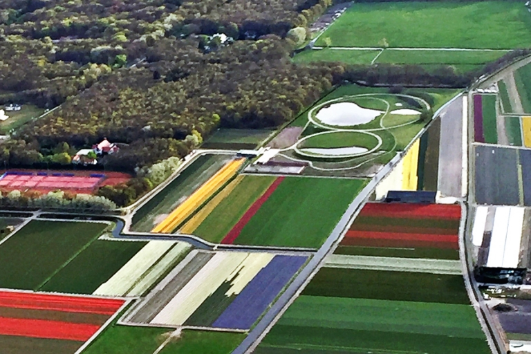 01_tulips_netherlands_blog