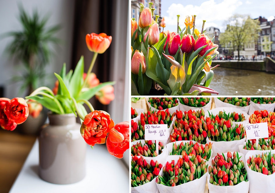 02_tulips_netherlands_blog