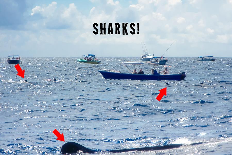 03_isla_mujeres_whale_sharks_blog