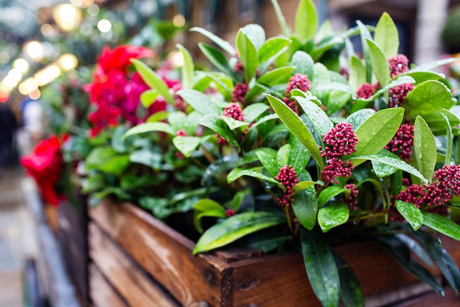 covent_garden_market_flowers